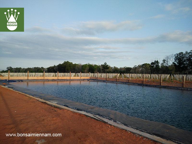 Ao dự trữ chứa nước tưới thanh long