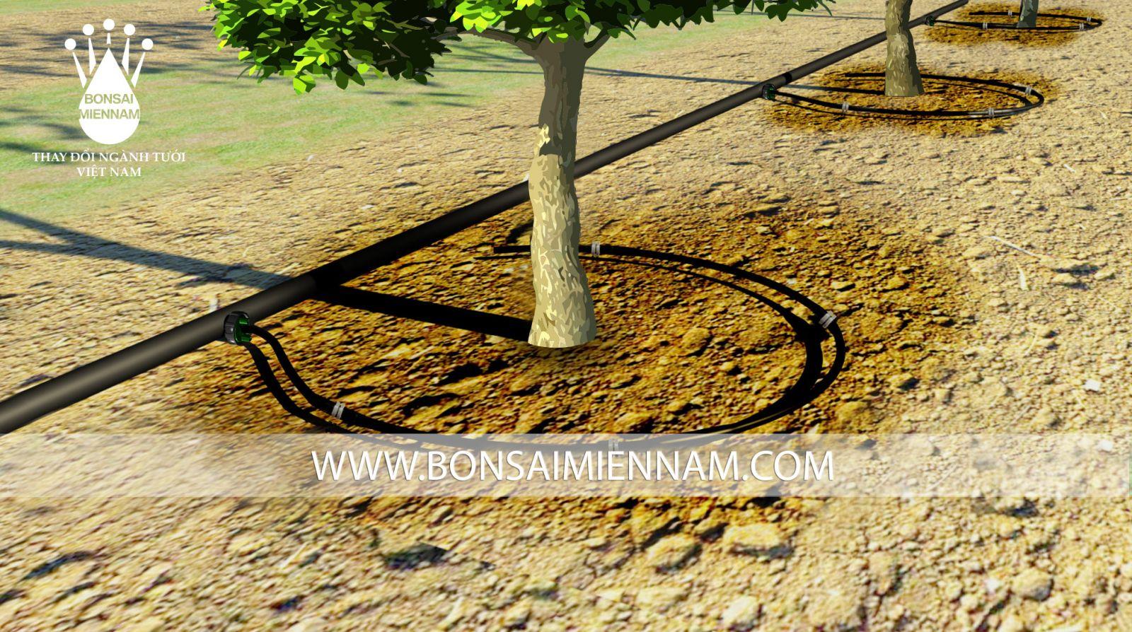 Mô hình tưới nhỏ giọt cho cây