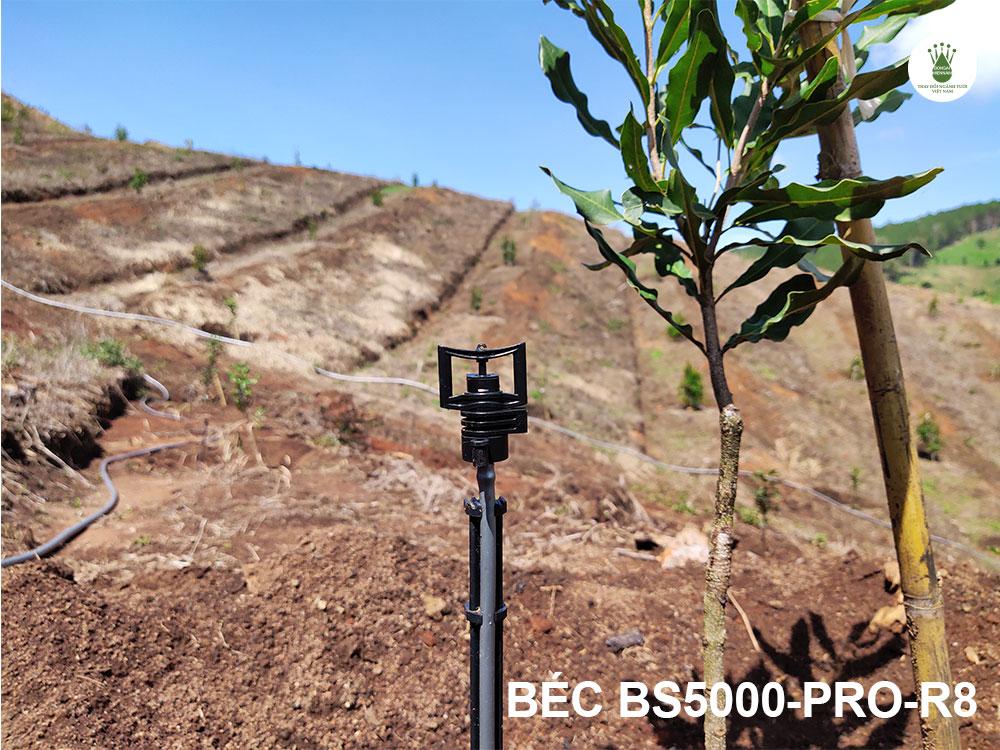 Sử dụng béc bù áp BS5000-Pro-R8 tưới cho đồi macca ở Lâm Hà, Lâm Đồng.